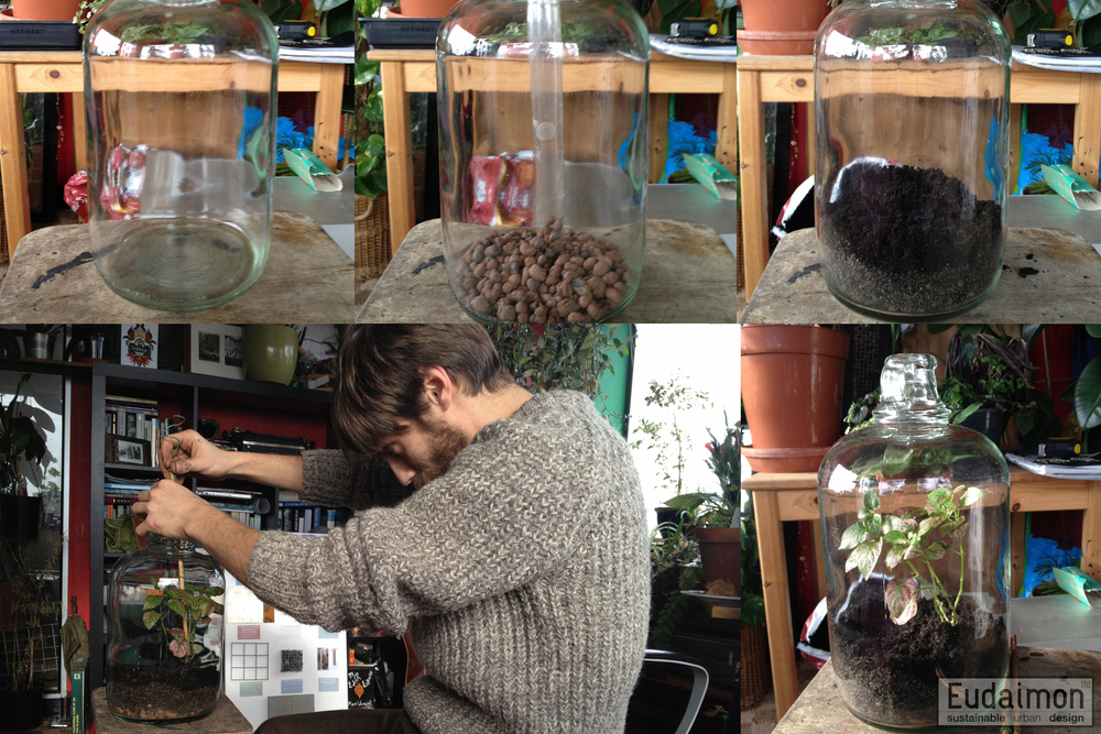 A Rough How to Guide to Terrariums
