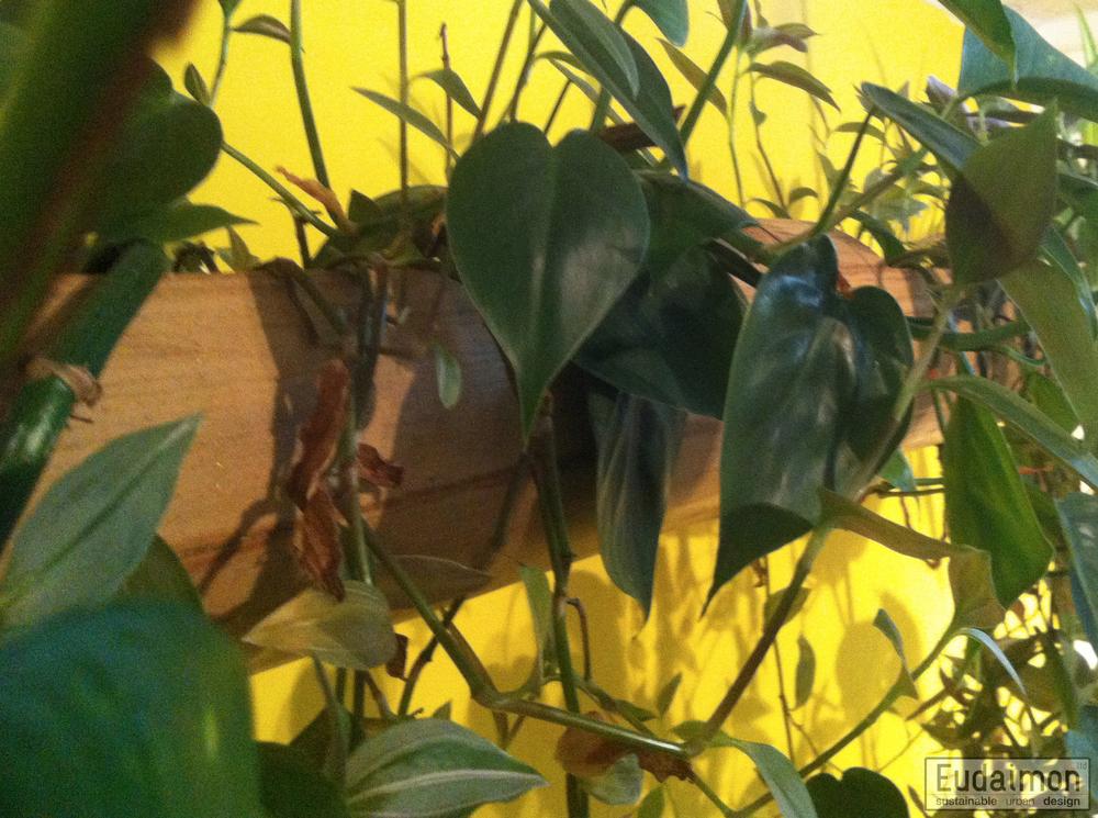 hanging garden (2 of 3).jpg