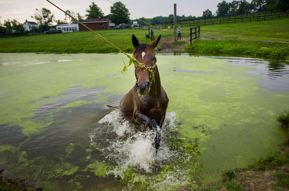 horseblog057.JPG