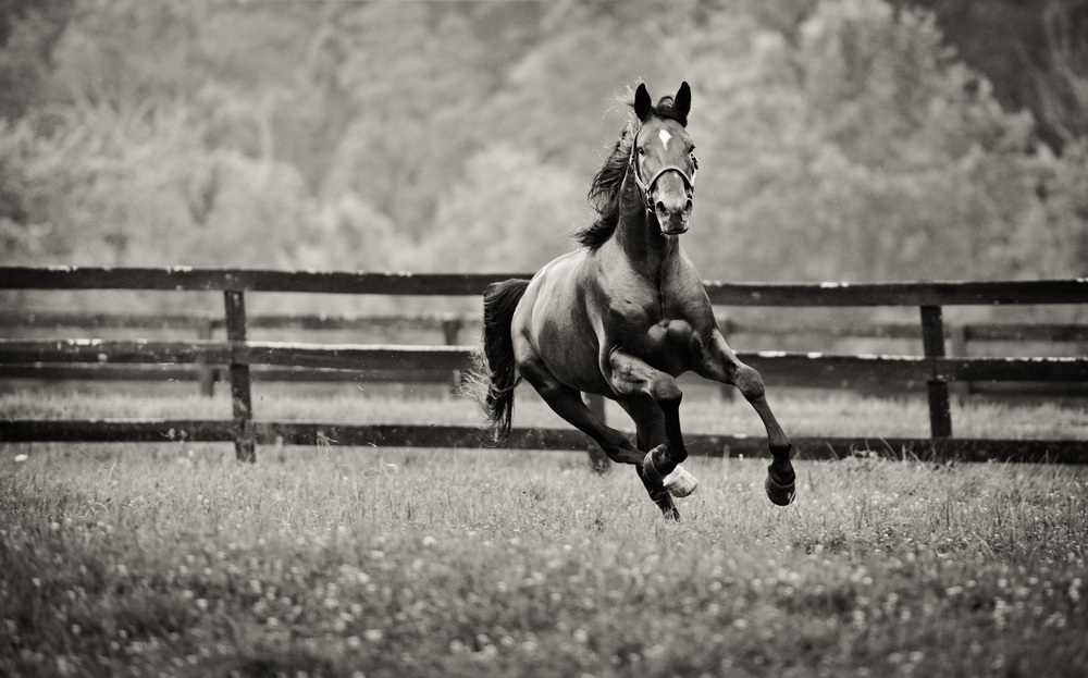 horseblog065.JPG