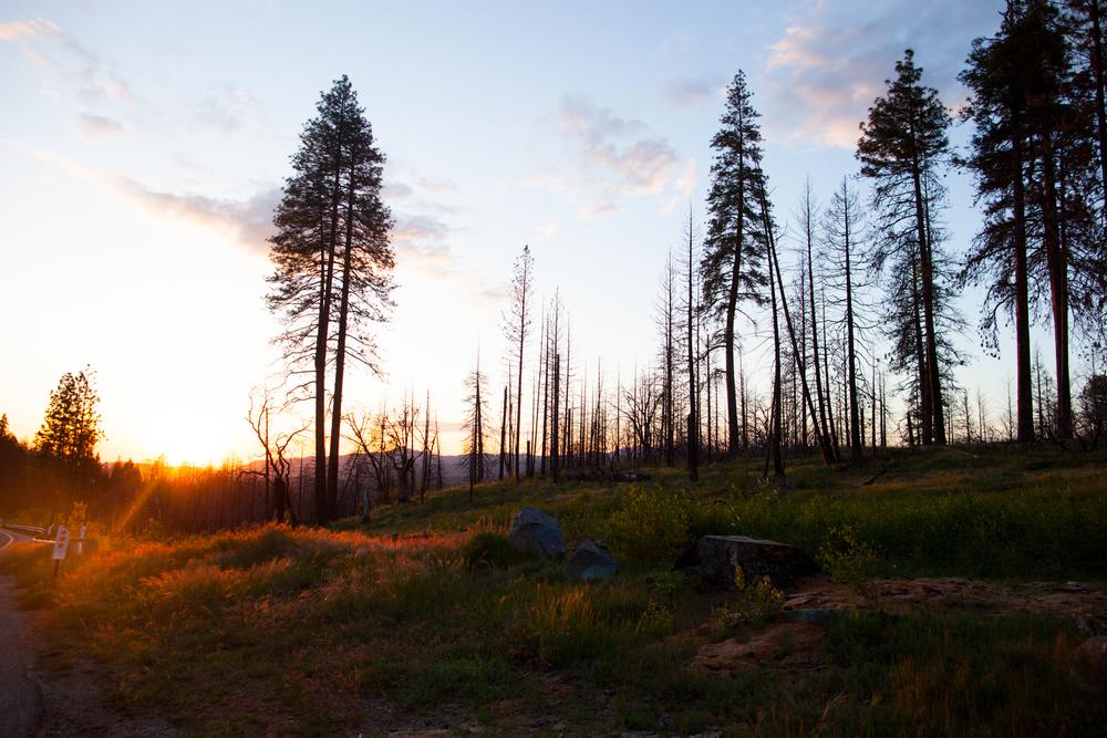 Yosemite-51.jpg