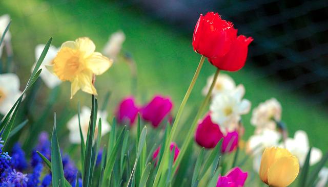 1024px-Colorful_spring_garden.jpg