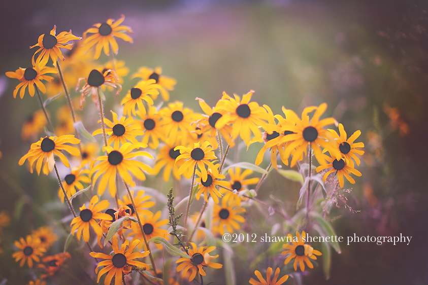 Massachusetts Outdoor Photographer
