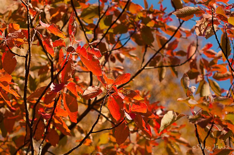 Fall-07.jpg