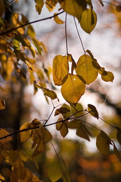 Fall-22.jpg