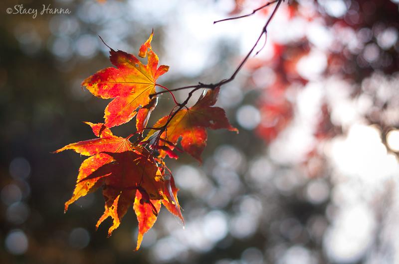 Fall-11.jpg