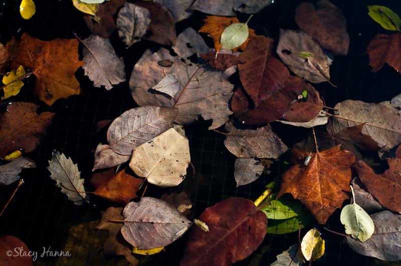 Fall-12.jpg