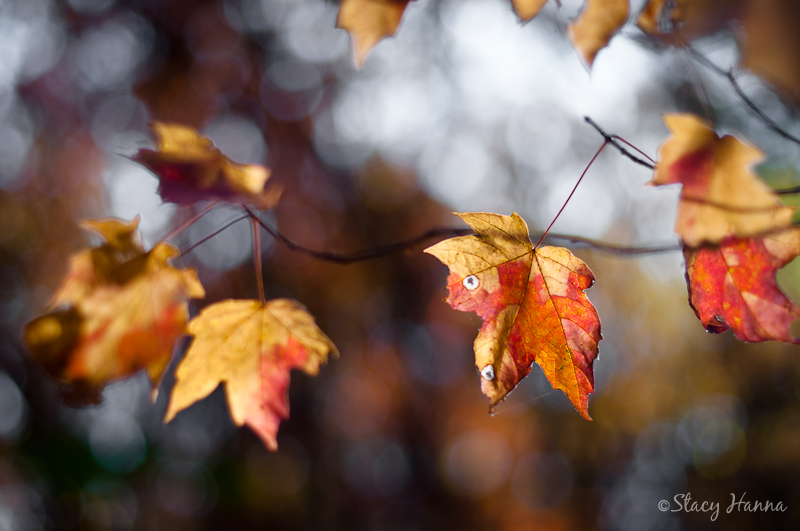 Fall-24.jpg