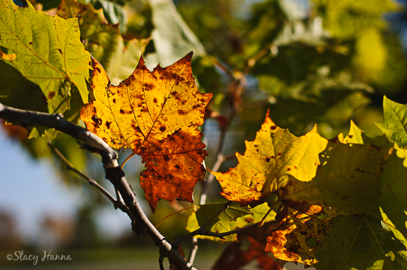 Fall-04.jpg