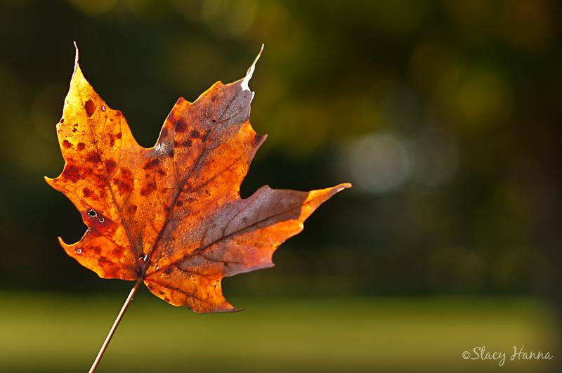 Fall-06.jpg