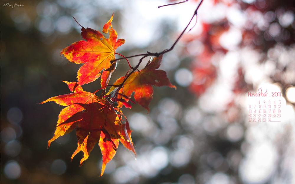 November_1280x800.jpg