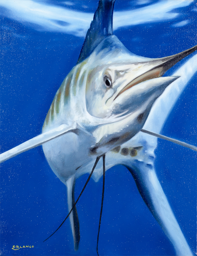 Marlin Study