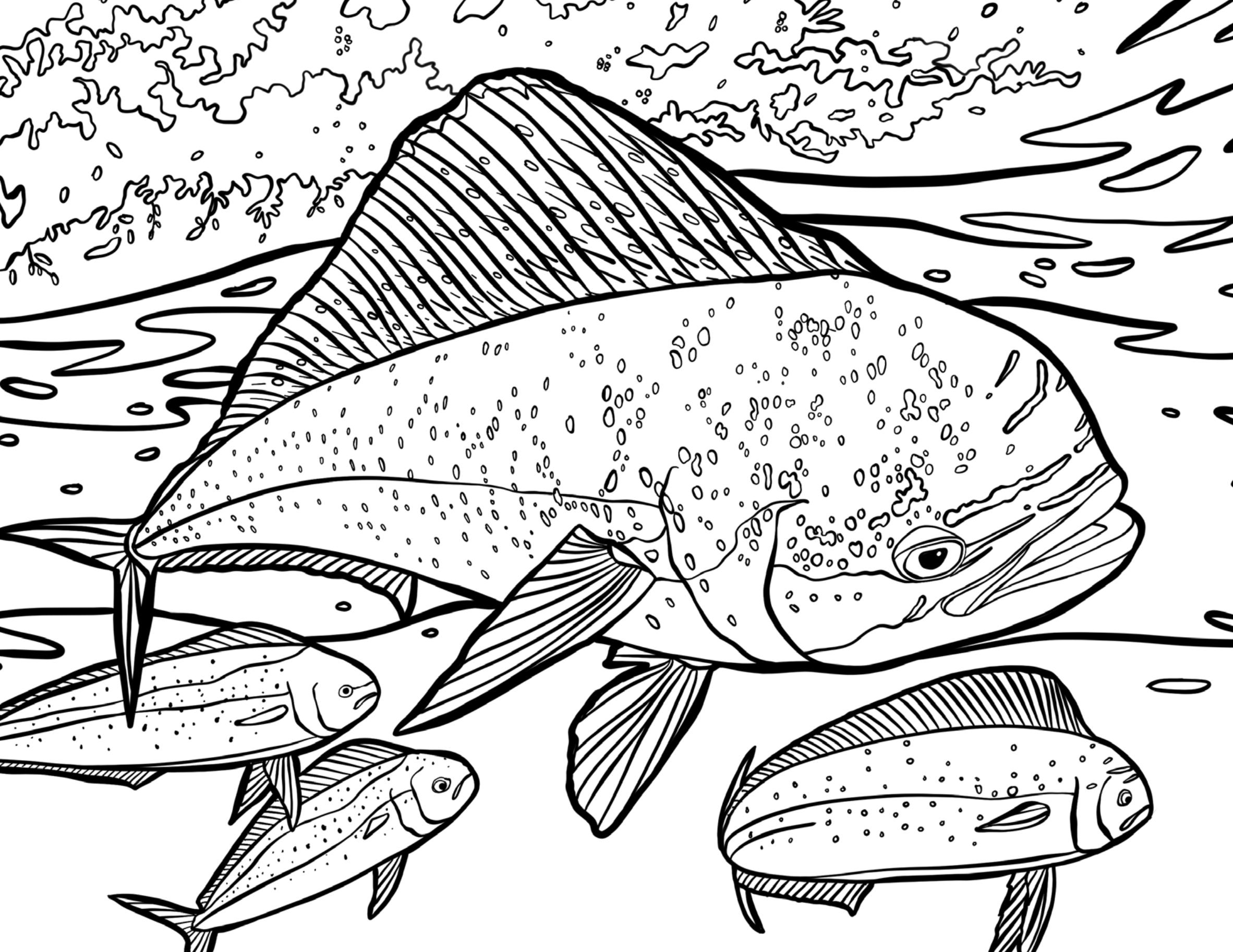 The Game Fish Coloring Book — RICHARD BLANCO