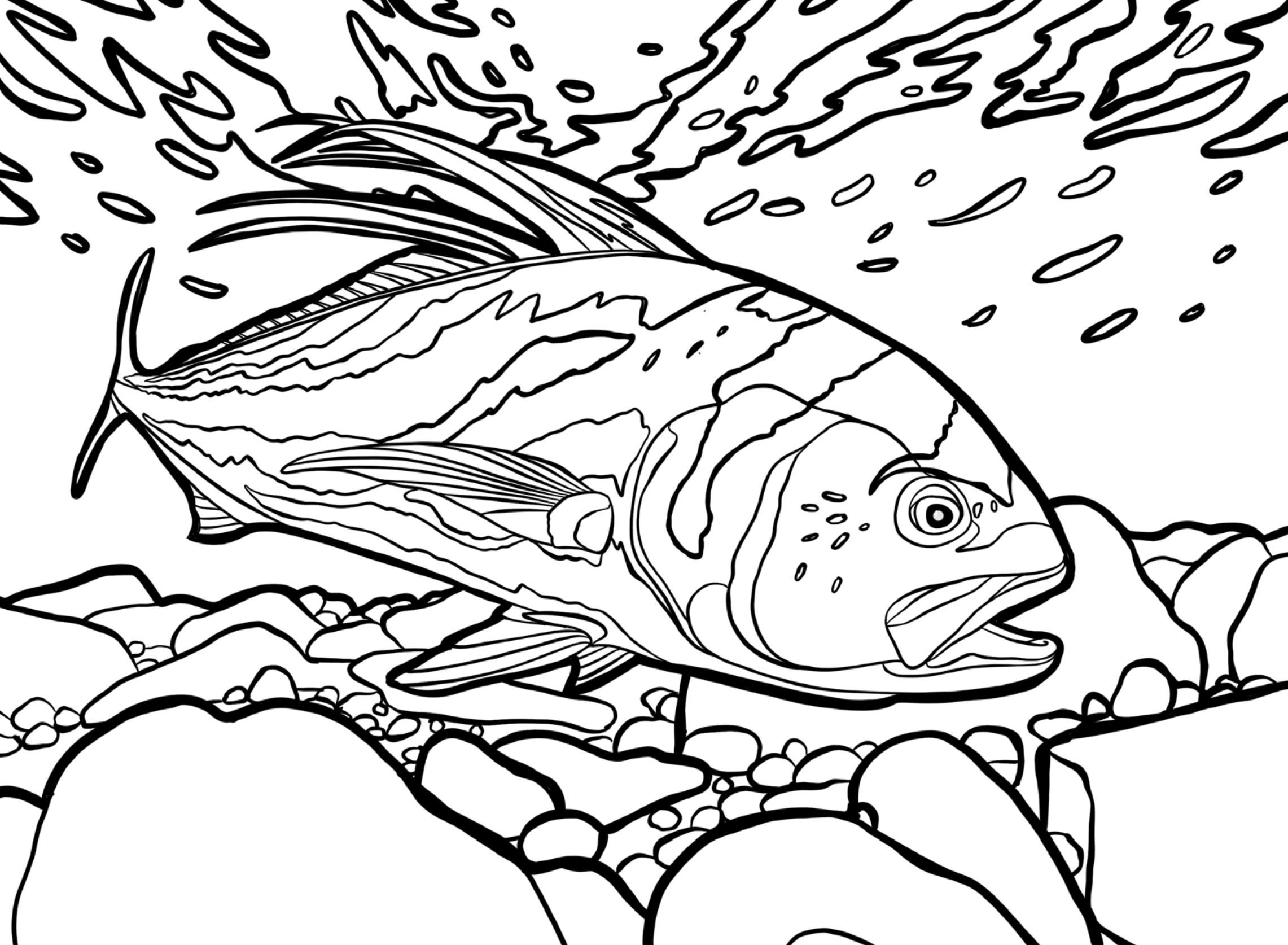 Famous Fish Coloring Book Photos