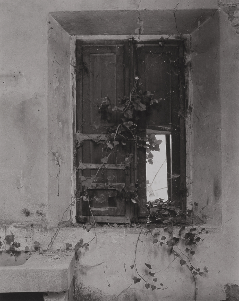 T-Shuttered Window & Vines, Abandoned House-Asciano.jpg
