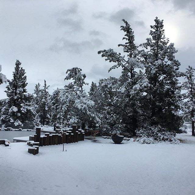 The view from our cabin we rented ❤️ #bend #oregon #woods #forest #adventure #love #life #cabin #morning #snow