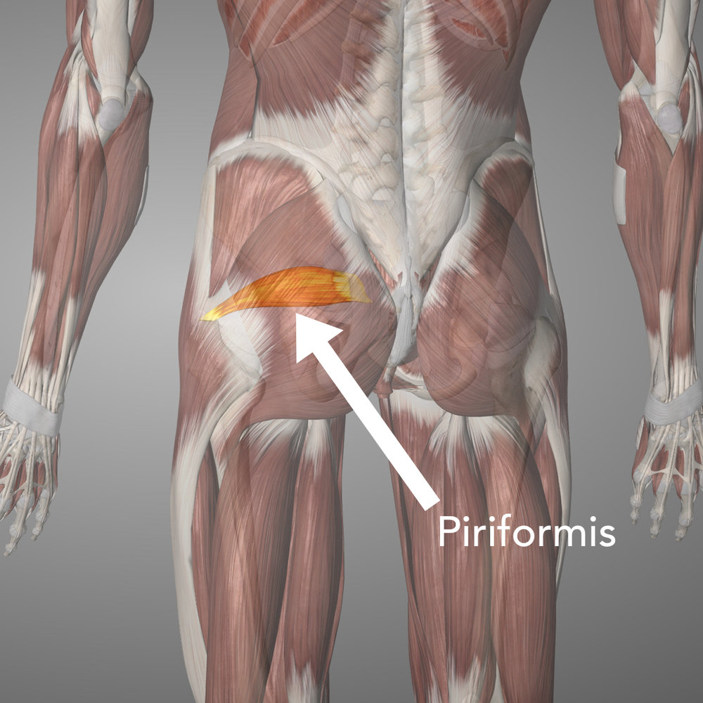 The Piriformis sits right in the middle of the butt cheek, directly under the glute max