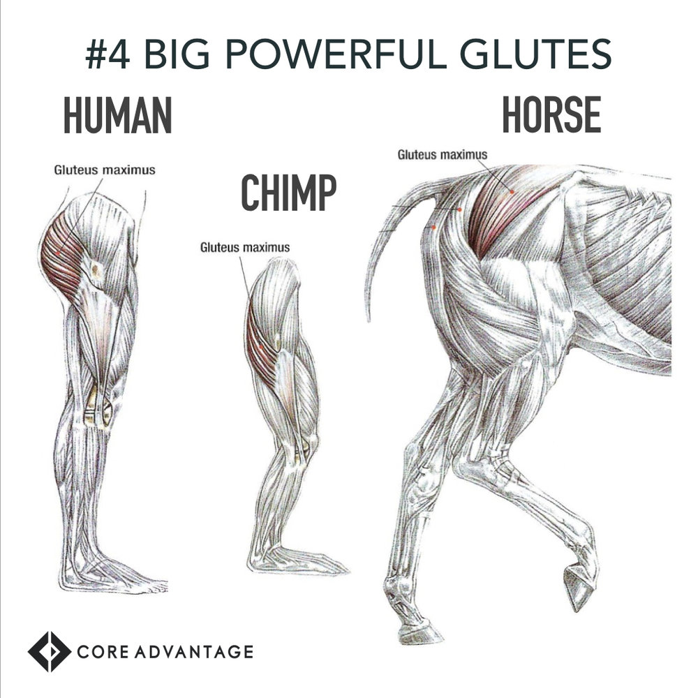 #4 Big, Powerful Glutes