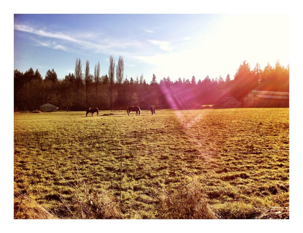 Daily Dog Walk -12/12/11