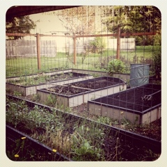 Garden 2011