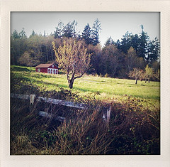 Originally uploaded by  zo_irish      ...another walk down Old Sunny Beach Road. Check Flickr, for more.