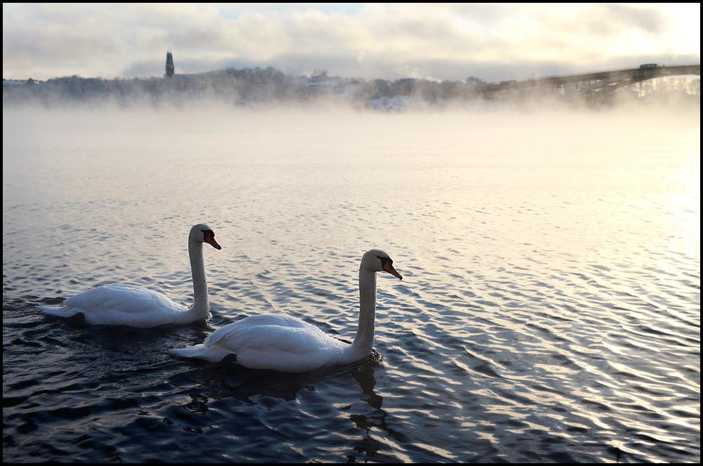 kungsholmen2.jpg
