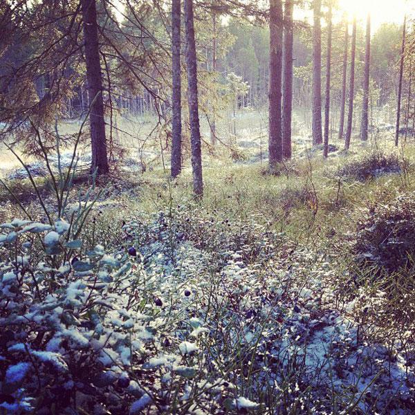 Täfteå, Norrland