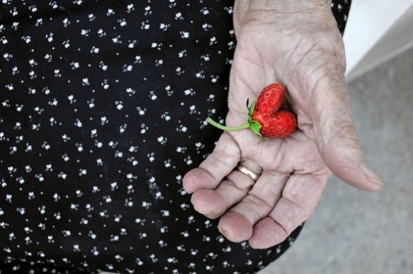 S ummer at Granny's. This is a heart-shaped stawberry in the hand of my grandmother. (Photo and caption by Szabo Eszter)