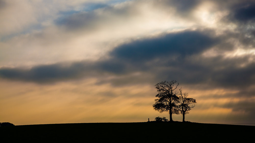 NMP-Cash-For-Kids-Lonely-Tree.jpg