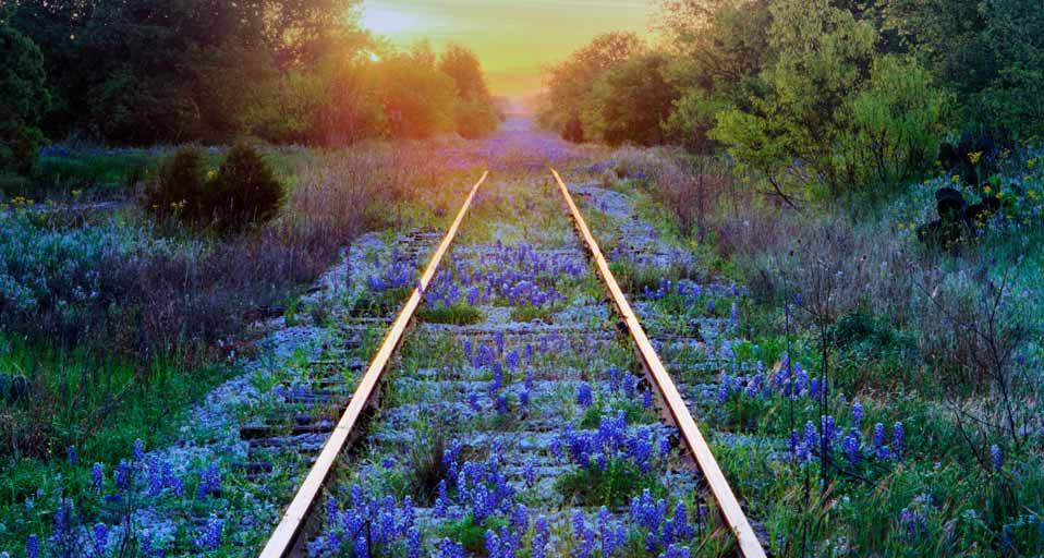 Tracks & Wildflowers.jpg