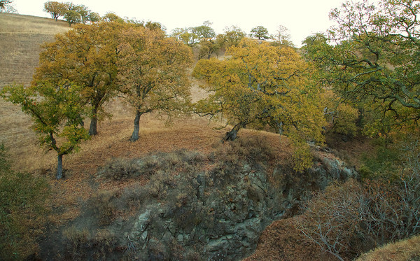 The Oaks were changing color in the late fall
