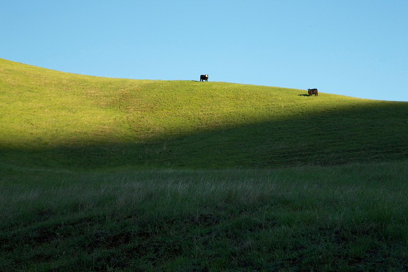 Grazing cows on the property help mitigate tall, dry grass as a fire hazard.
