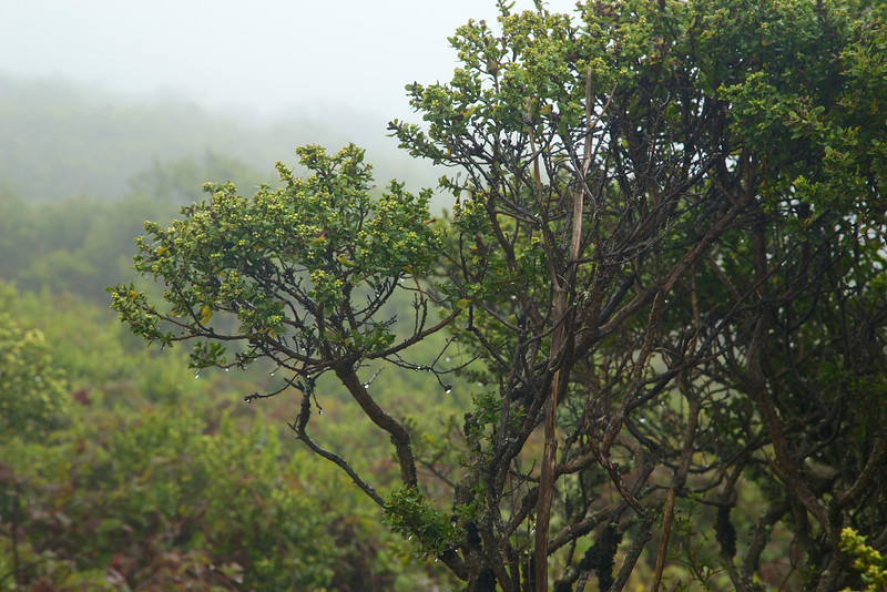 The mist gets thick and heavy, and the plants soak up the much needed moisture.