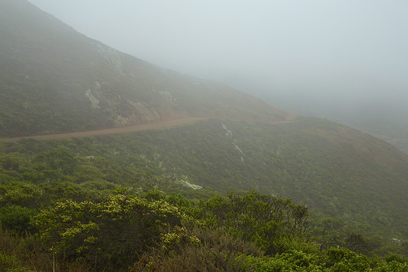 Coastal Trail disappears in to the fog