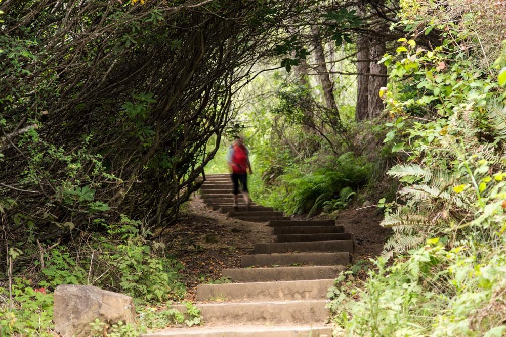 Dipsea Trail_-3.jpg