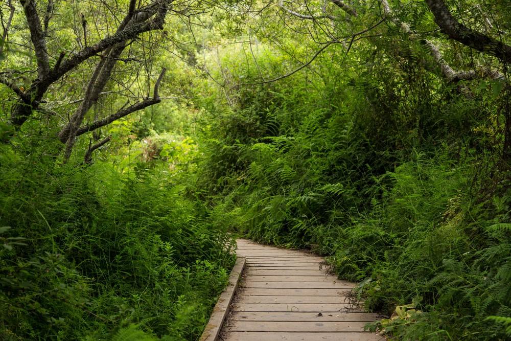 Dipsea Trail_-7.jpg