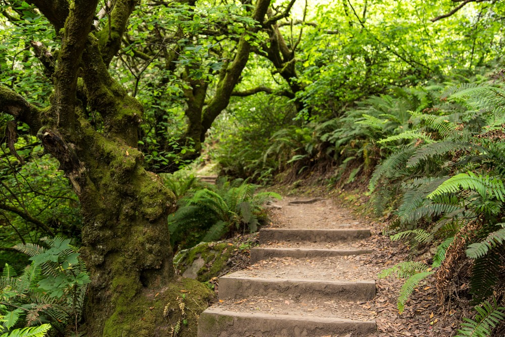 Dipsea Trail_-13.jpg