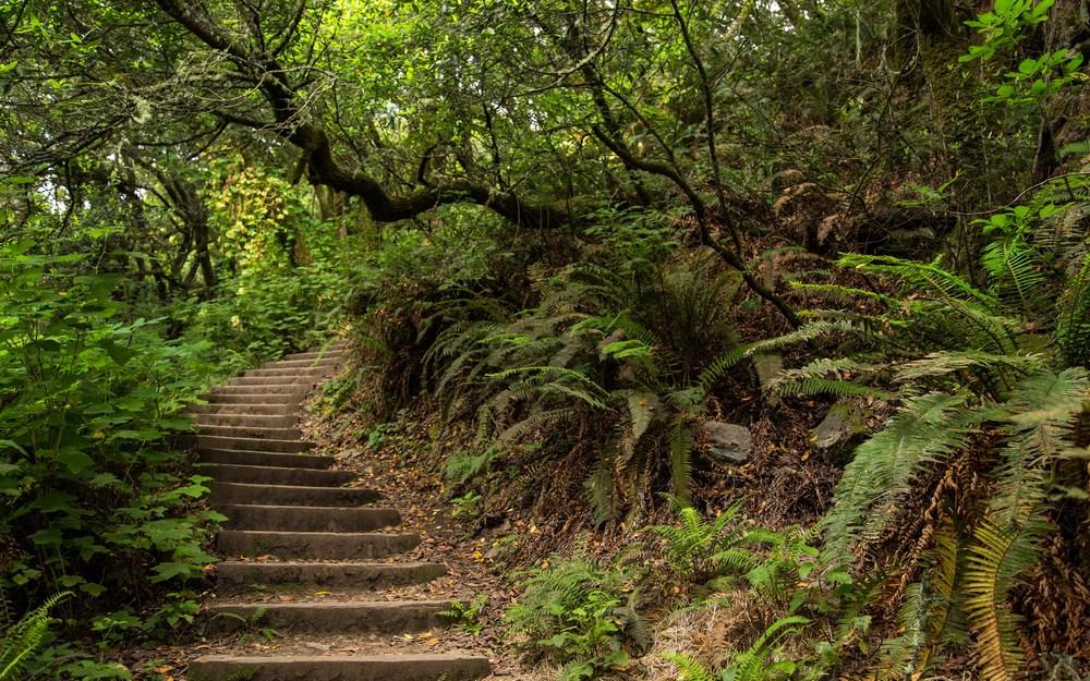 Dipsea Trail_-24.jpg