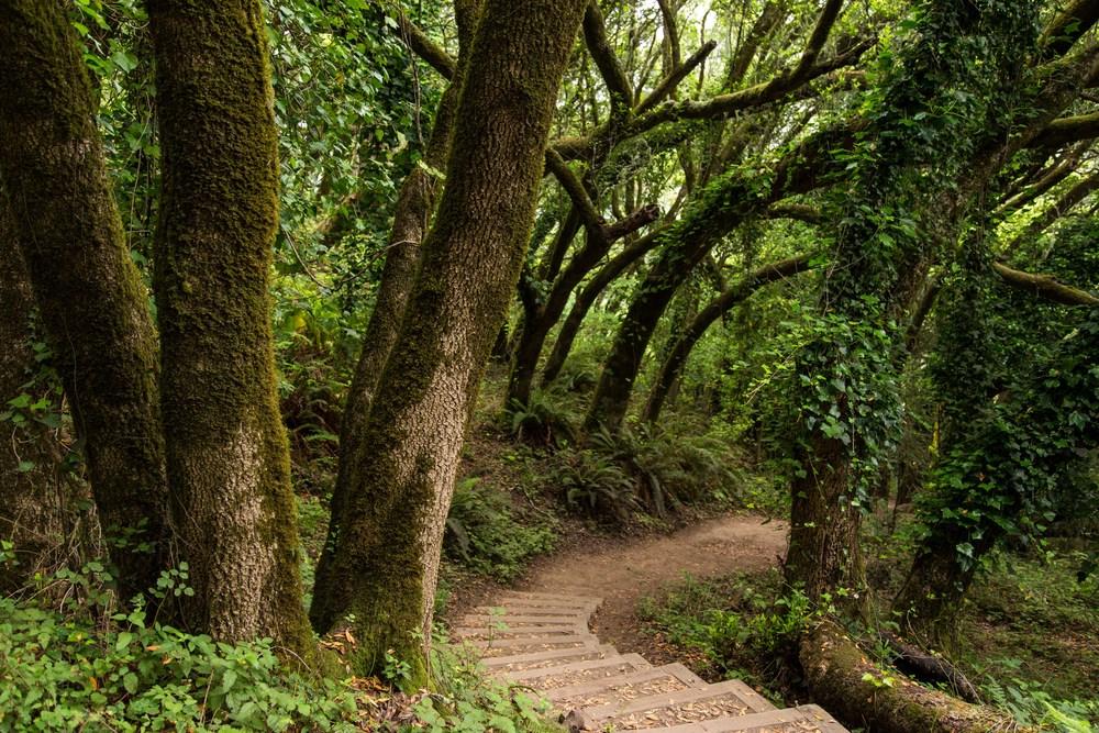 Dipsea Trail_-28.jpg