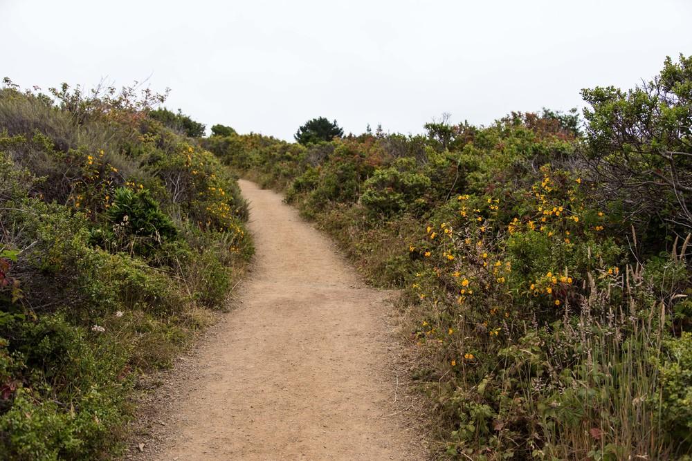 Dipsea Trail_-31.jpg
