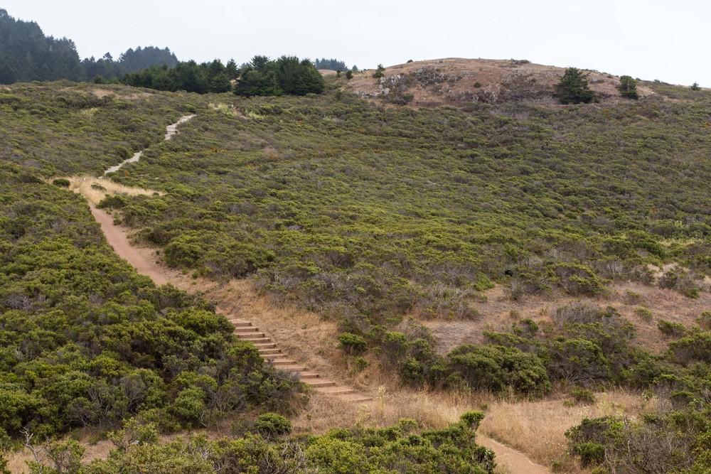 Dipsea Trail_-40.jpg