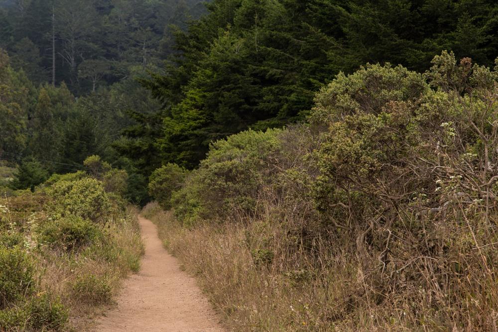 Dipsea Trail_-46.jpg