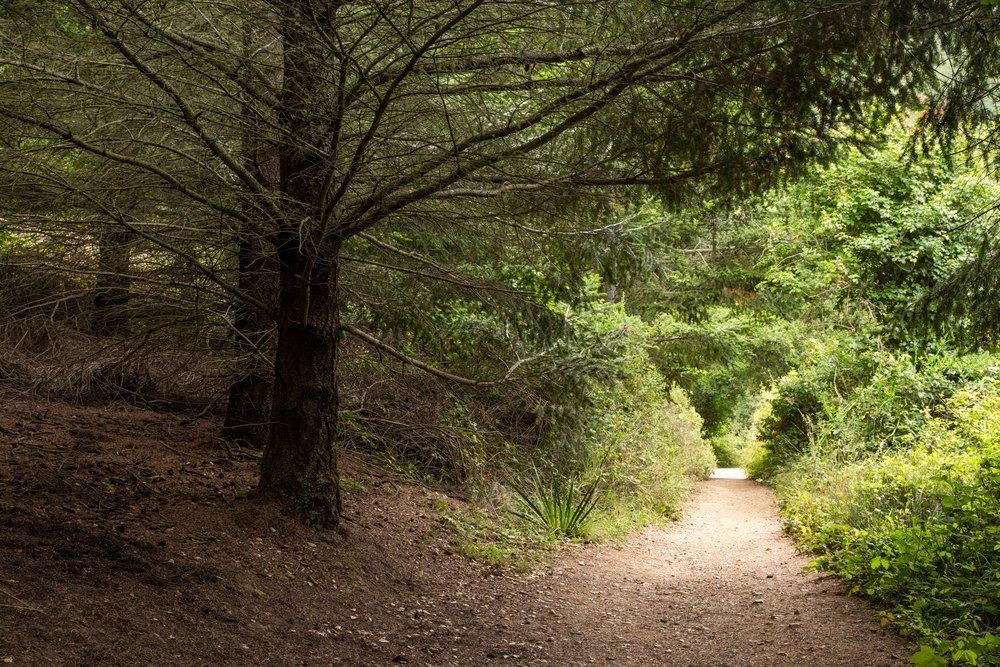 Dipsea Trail_-49.jpg