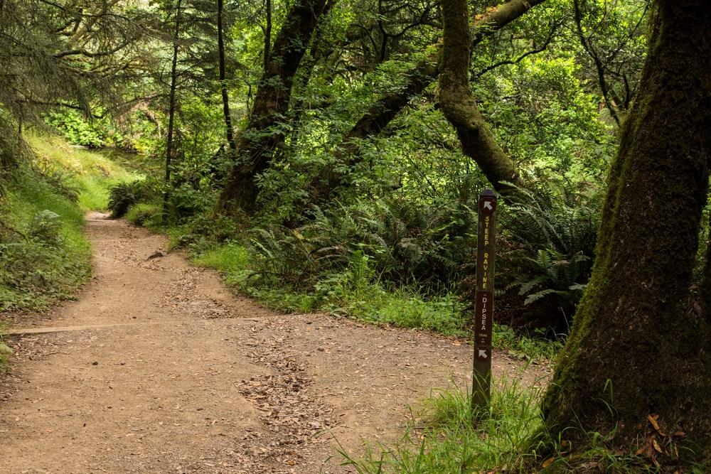 Dipsea Trail_-54.jpg