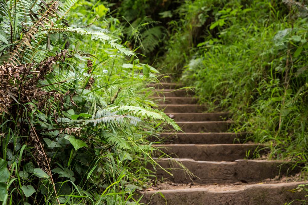 Dipsea Trail_-74.jpg
