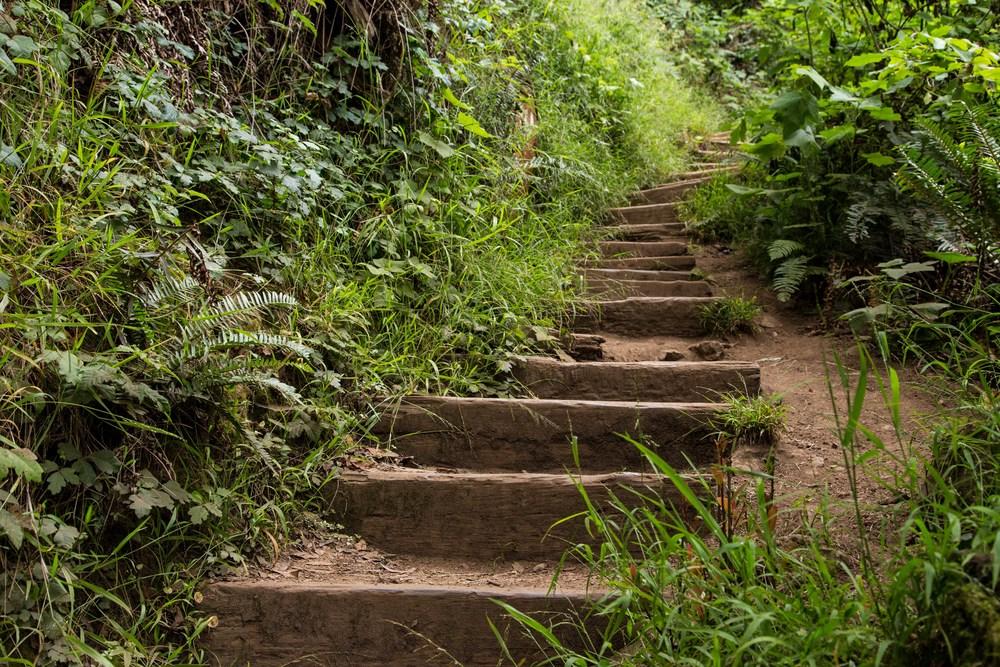 Dipsea Trail_-75.jpg