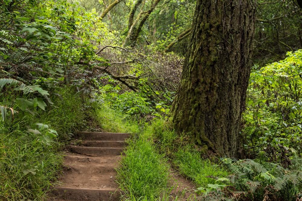 Dipsea Trail_-79.jpg
