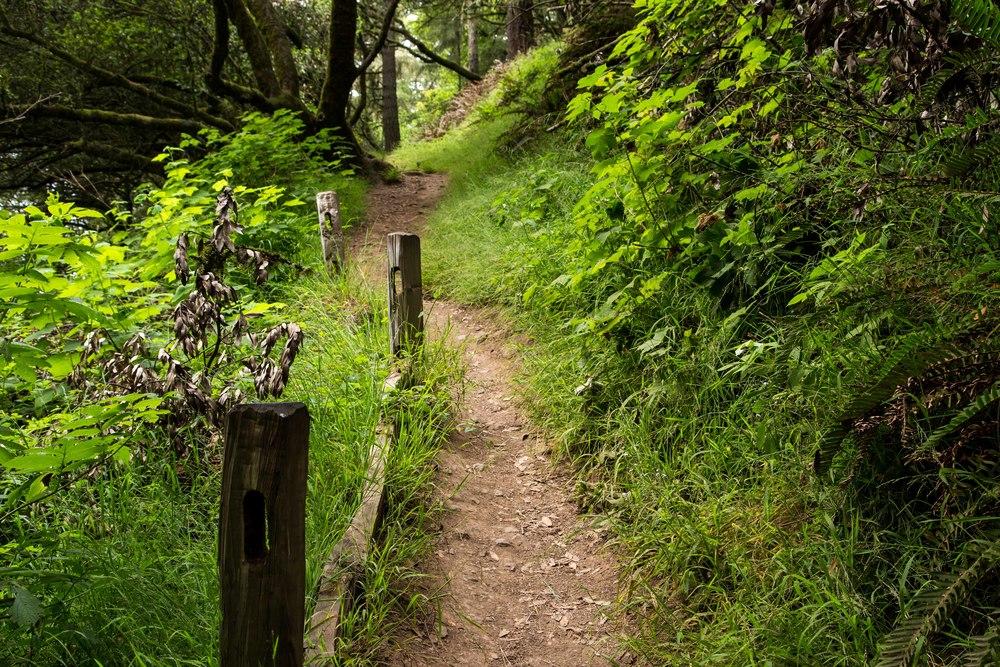Dipsea Trail_-85.jpg