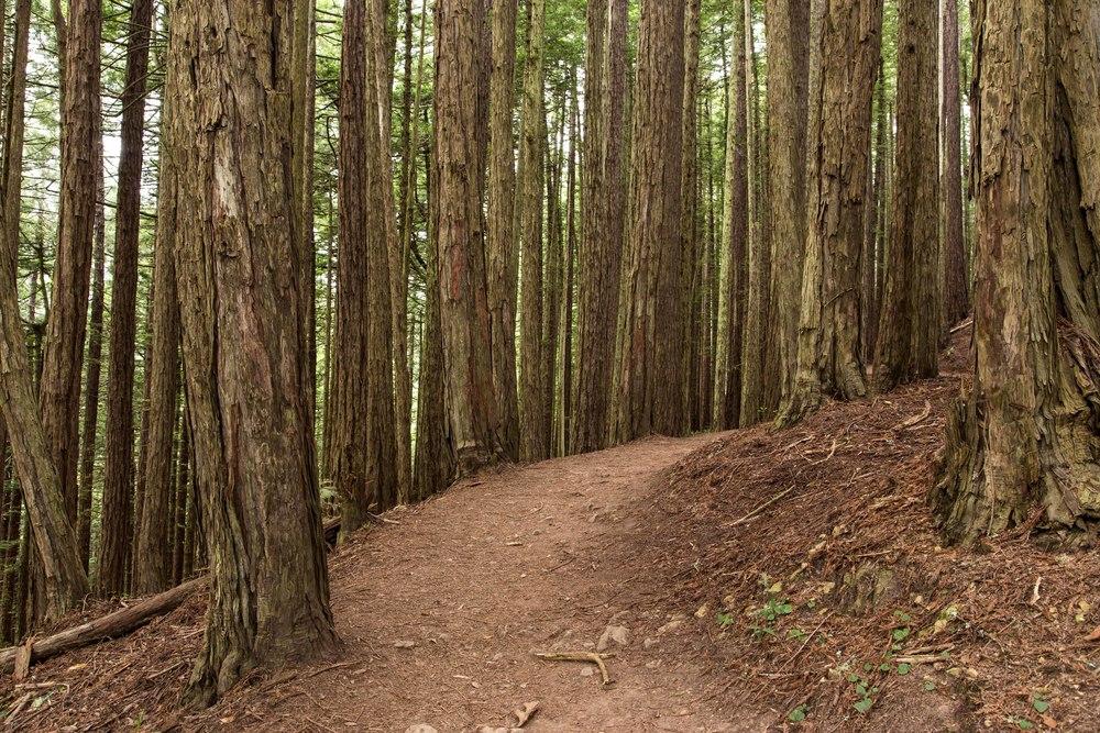 Dipsea Trail_-98.jpg