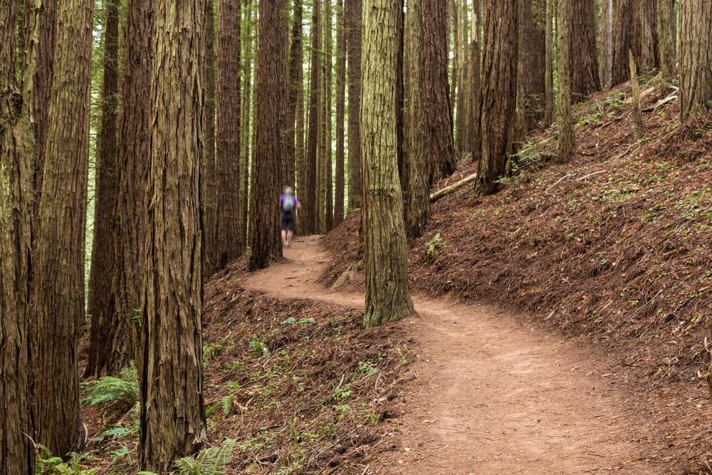 Dipsea Trail_-103.jpg